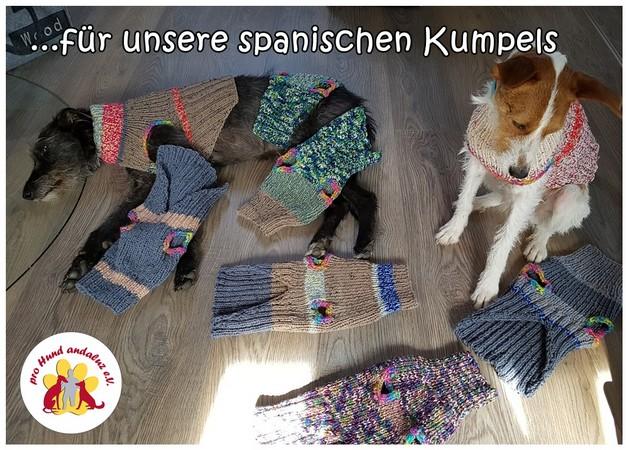 hund nehmen aus spanien